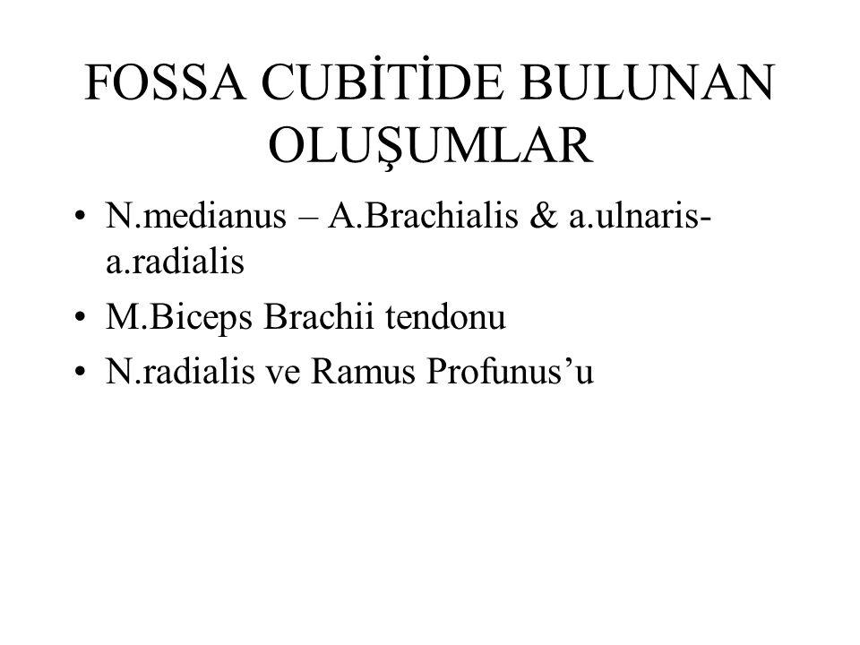 YÜZEYEL VENLER ve DERİ İNNERVASYONU V.Cephalica V.Basilica V.Mediana Cubiti N.Cutaneus Antebrachii Med (Pl Brach) N.Cutaneus Lat (N.musculocutaneus'un)