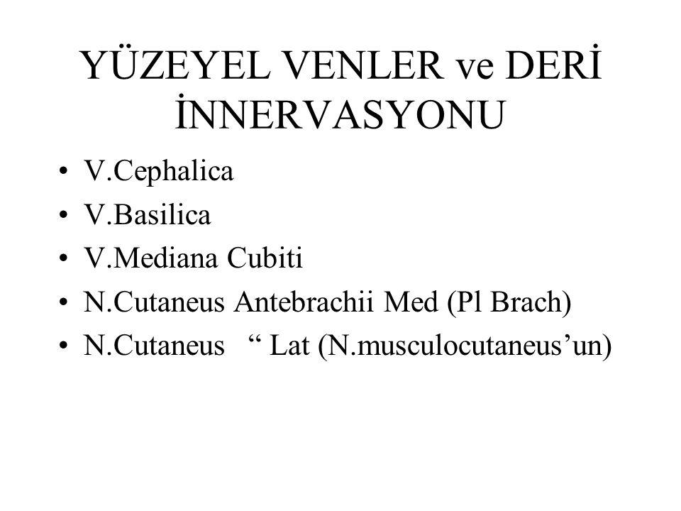 "YÜZEYEL VENLER ve DERİ İNNERVASYONU V.Cephalica V.Basilica V.Mediana Cubiti N.Cutaneus Antebrachii Med (Pl Brach) N.Cutaneus "" Lat (N.musculocutaneus'"