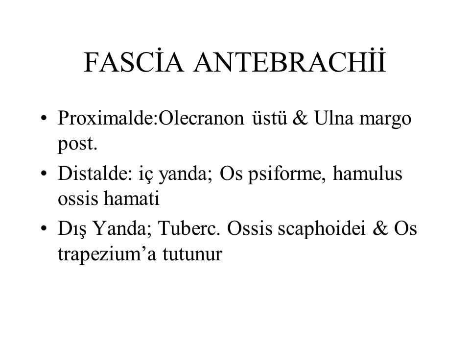 FASCİA ANTEBRACHİİ Proximalde:Olecranon üstü & Ulna margo post. Distalde: iç yanda; Os psiforme, hamulus ossis hamati Dış Yanda; Tuberc. Ossis scaphoi