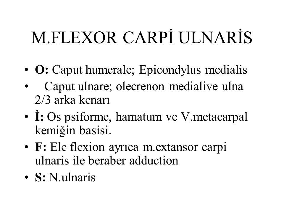 M.FLEXOR CARPİ ULNARİS O: Caput humerale; Epicondylus medialis Caput ulnare; olecrenon medialive ulna 2/3 arka kenarı İ: Os psiforme, hamatum ve V.metacarpal kemiğin basisi.