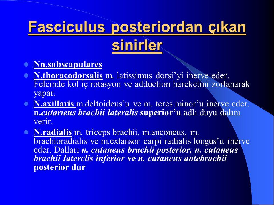 Fasciculus medialis'ten çıkan sinirler. N.medianus'un radix medialis'i N.medianus sempatik lif açısından zengin olduğundan ön kol, el ve parmakların p