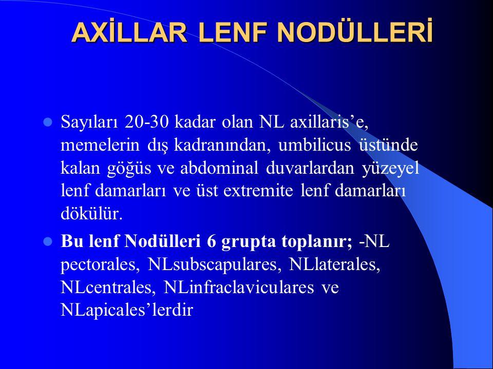 AXİLLAR LENF NODÜLLERİ Sayıları 20-30 kadar olan NL axillaris'e, memelerin dış kadranından, umbilicus üstünde kalan göğüs ve abdominal duvarlardan yüzeyel lenf damarları ve üst extremite lenf damarları dökülür.