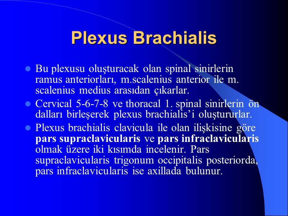 Spinal Sinir ve Plexus oluşumu 31 çift spinal sinir for.intervertebrale'den geçerek medulla spinalis'i terkeder. Her bir spinal sinir medulla spinalis