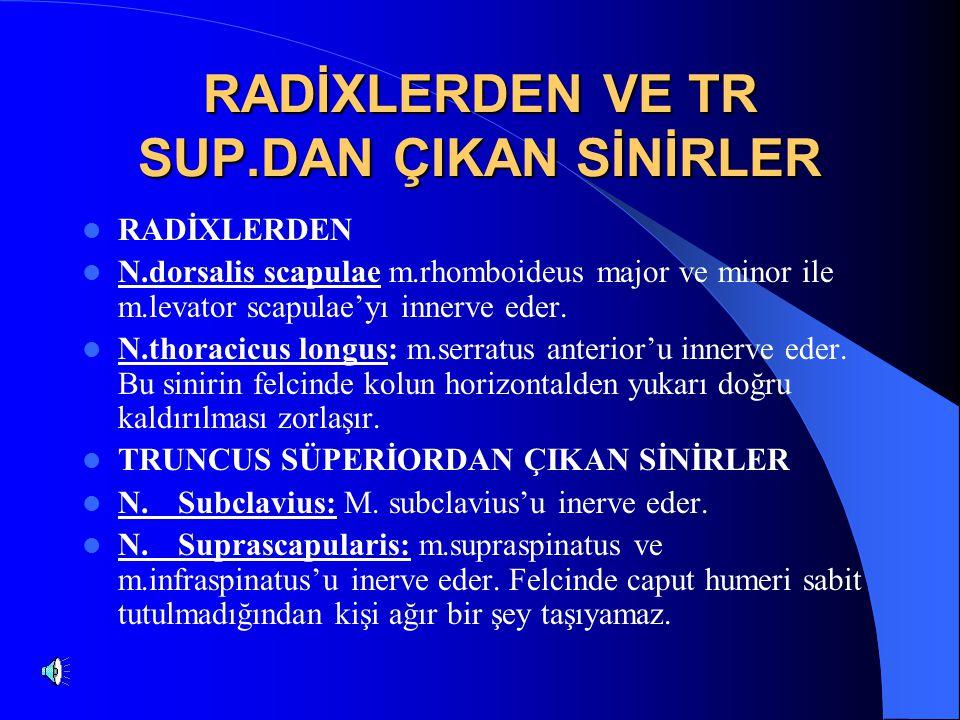 RADİXLERDEN VE TR SUP.DAN ÇIKAN SİNİRLER RADİXLERDEN N.dorsalis scapulae m.rhomboideus major ve minor ile m.levator scapulae'yı innerve eder.