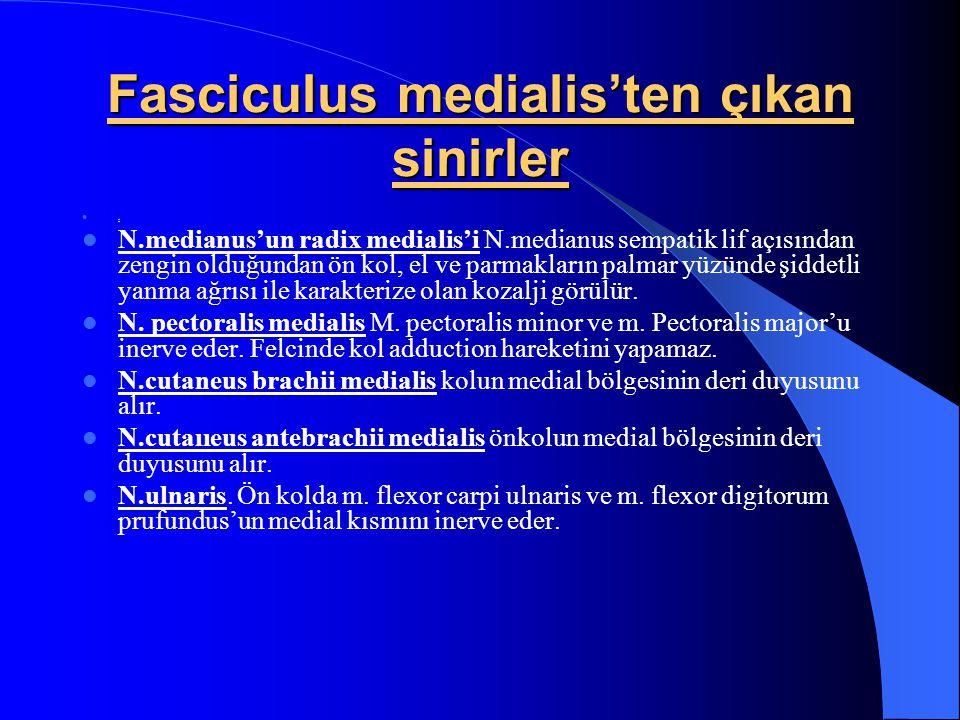 Fasciculus lateralis'ten çıkan sinirler N.pectoralis lateralis m.pectoralis majoru inerve eder. Felcinde kol adduction hareketini yapamaz. N.musculocu