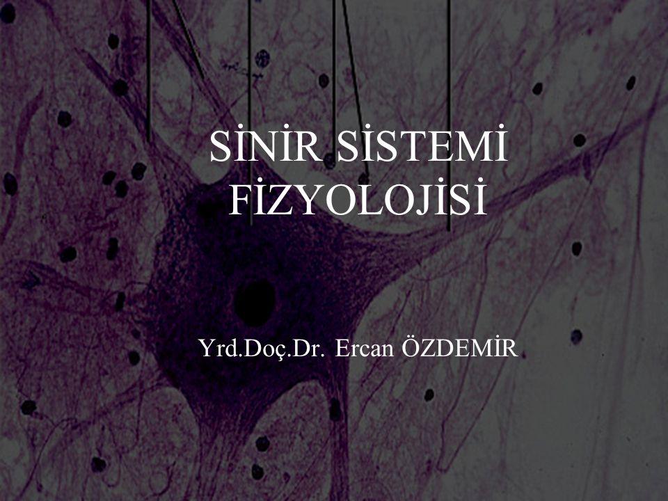 Sinir Sistemi Fonksiyonları n Sinir sisteminin üç önemli fonksiyonu vardır: – Duysal n Reseptörler ile iç ve dış çevrenin denetimi – Bütünleşme, kaynaşma n Sensoriyal bilgileri toplayıp bunları işleyerek uygun cevapların oluşturulması – Motor n Oluşan bu cevapların efektör sinyallerle uygun şekilde hedef organlara ulaştırılması