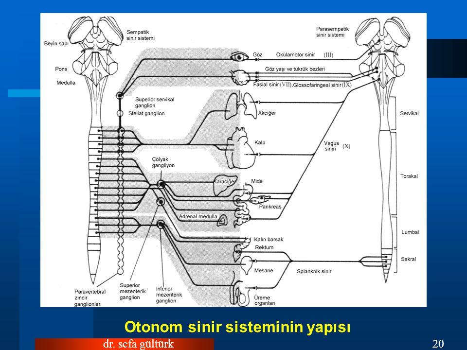 dr. sefa gültürk20 Otonom sinir sisteminin yapısı