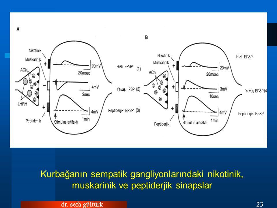 dr. sefa gültürk23 Kurbağanın sempatik gangliyonlarındaki nikotinik, muskarinik ve peptiderjik sinapslar