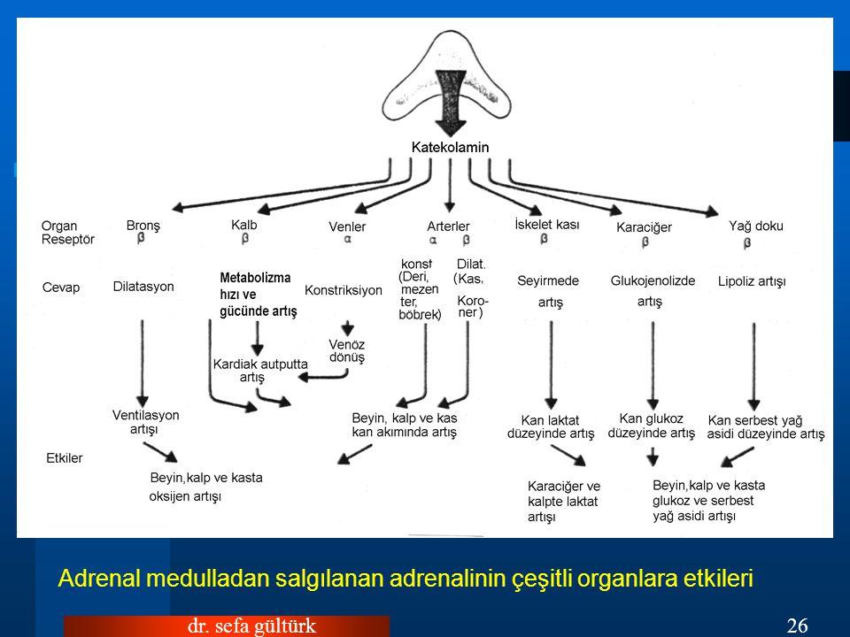 dr. sefa gültürk26 Adrenal medulladan salgılanan adrenalinin çeşitli organlara etkileri