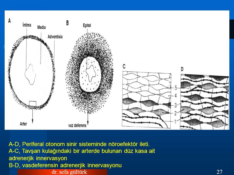 dr.sefa gültürk27 A-D, Periferal otonom sinir sisteminde nöroefektör ileti.