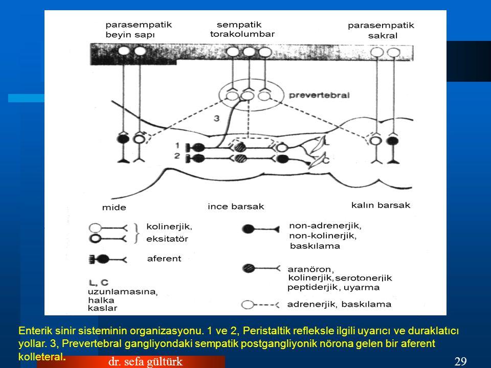 dr.sefa gültürk29 Enterik sinir sisteminin organizasyonu.