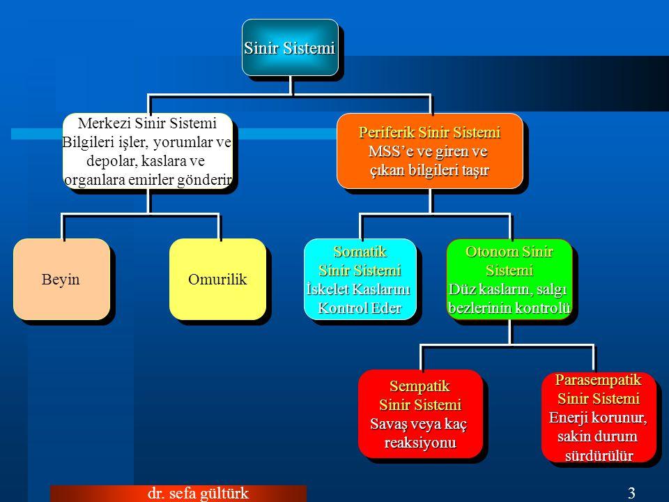 dr. sefa gültürk3 Parasempatik Sinir Sistemi Enerji korunur, sakin durum sürdürülür Parasempatik Sinir Sistemi Enerji korunur, sakin durum sürdürülür