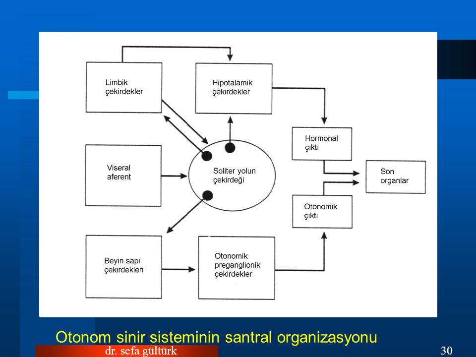 dr. sefa gültürk30 Otonom sinir sisteminin santral organizasyonu