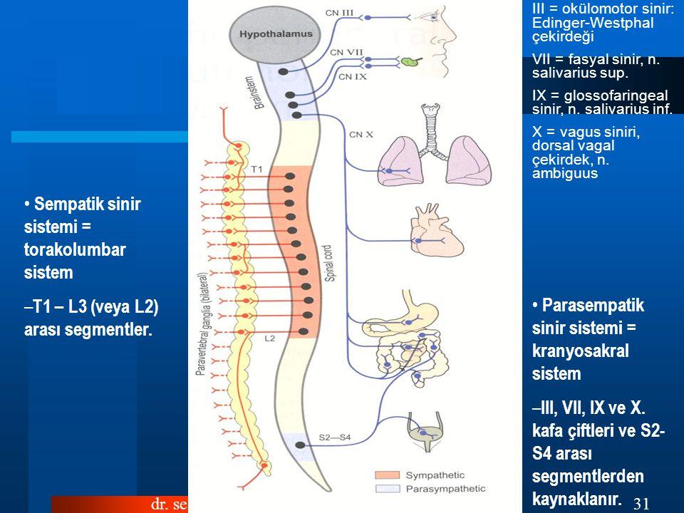 dr.sefa gültürk31 III = okülomotor sinir: Edinger-Westphal çekirdeği VII = fasyal sinir, n.