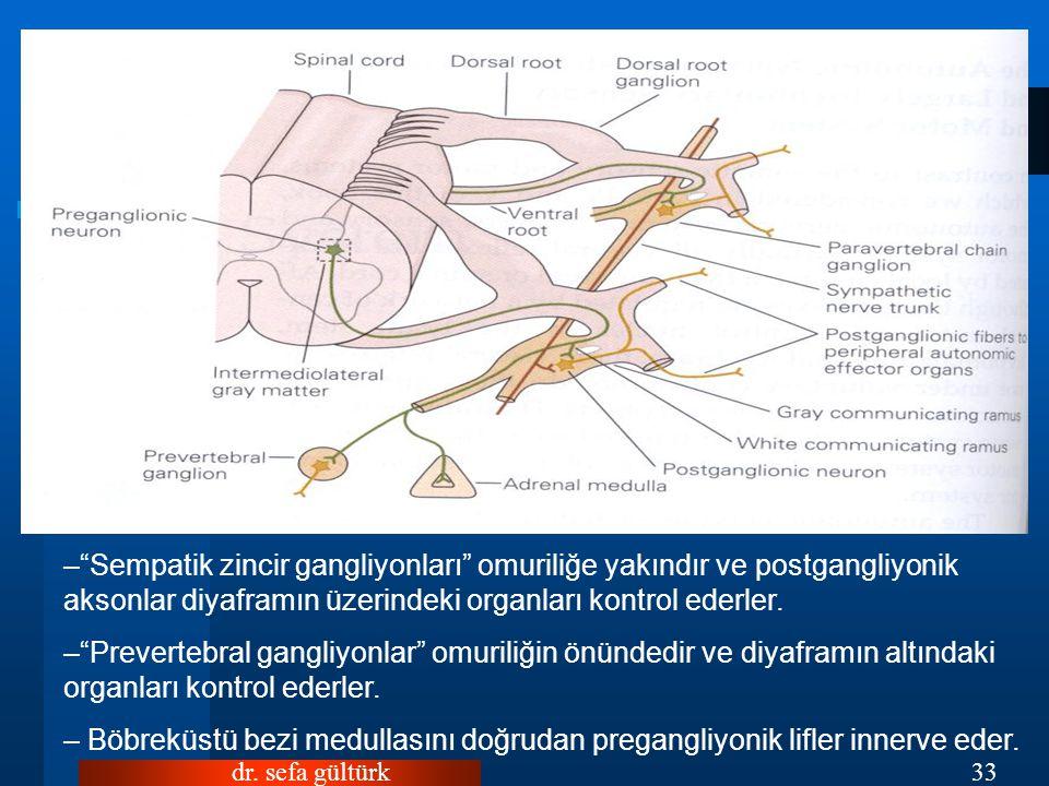 """dr. sefa gültürk33 –""""Sempatik zincir gangliyonları"""" omuriliğe yakındır ve postgangliyonik aksonlar diyaframın üzerindeki organları kontrol ederler. –"""""""