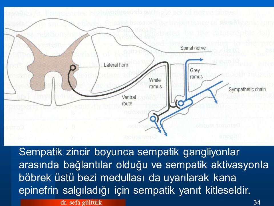 dr. sefa gültürk34 SEMPATİK SİSTEM Sempatik zincir boyunca sempatik gangliyonlar arasında bağlantılar olduğu ve sempatik aktivasyonla böbrek üstü bezi