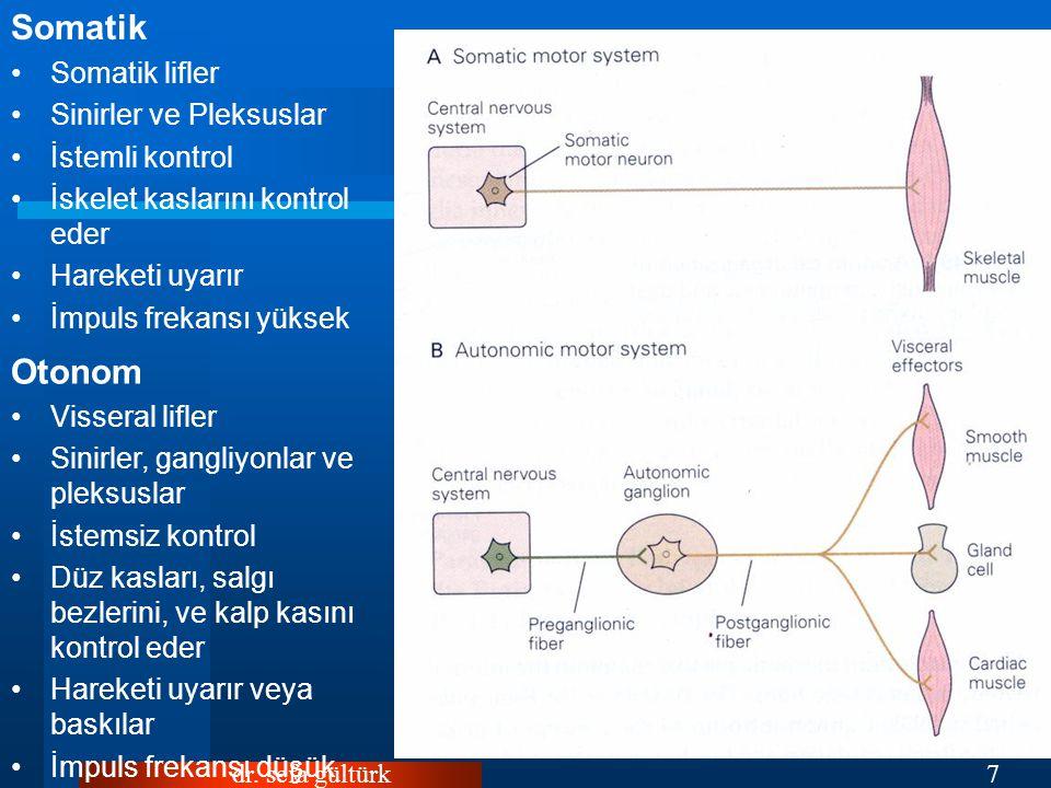 dr. sefa gültürk7 Somatik Somatik lifler Sinirler ve Pleksuslar İstemli kontrol İskelet kaslarını kontrol eder Hareketi uyarır İmpuls frekansı yüksek