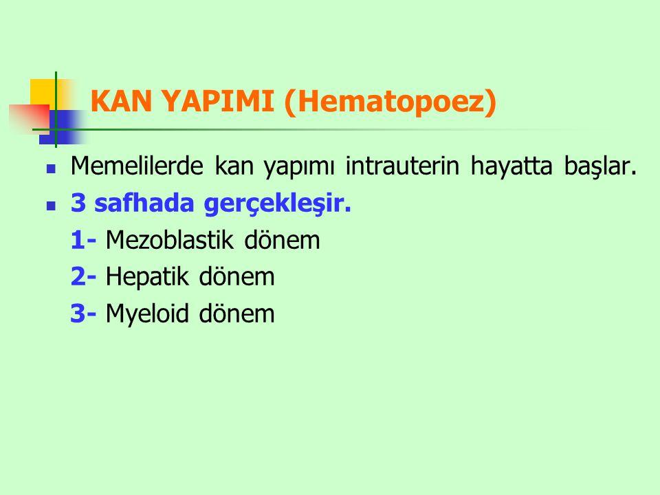 KAN YAPIMI (Hematopoez) Memelilerde kan yapımı intrauterin hayatta başlar.