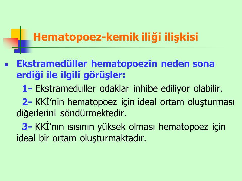 Hematopoez-kemik iliği ilişkisi Ekstramedüller hematopoezin neden sona erdiği ile ilgili görüşler: 1- Ekstrameduller odaklar inhibe ediliyor olabilir.
