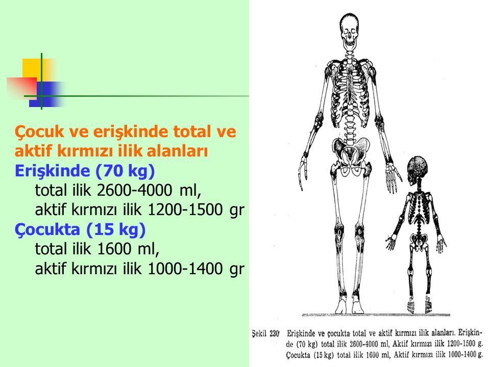 Çocuk ve erişkinde total ve aktif kırmızı ilik alanları Erişkinde (70 kg) total ilik 2600-4000 ml, aktif kırmızı ilik 1200-1500 gr Çocukta (15 kg) total ilik 1600 ml, aktif kırmızı ilik 1000-1400 gr