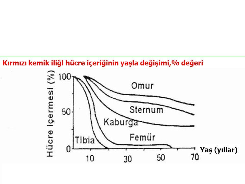Yaş (yıllar) Kırmızı kemik iliğl hücre içeriğinin yaşla değişimi,% değeri