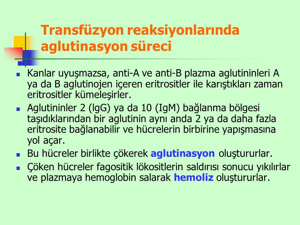 Transfüzyon reaksiyonlarında aglutinasyon süreci Kanlar uyuşmazsa, anti-A ve anti-B plazma aglutininleri A ya da B aglutinojen içeren eritrositler ile