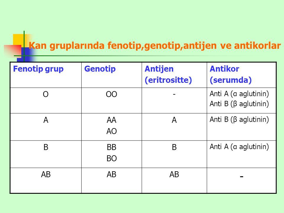 Kan gruplarında fenotip,genotip,antijen ve antikorlar Fenotip grupGenotipAntijen (eritrositte) Antikor (serumda) OOO- Anti A (α aglutinin) Anti B (β a