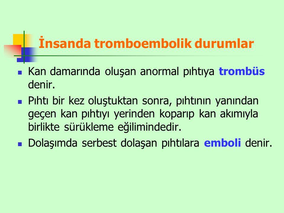 İnsanda tromboembolik durumlar Kan damarında oluşan anormal pıhtıya trombüs denir. Pıhtı bir kez oluştuktan sonra, pıhtının yanından geçen kan pıhtıyı