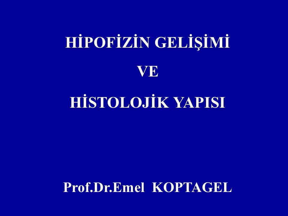 HİPOFİZİN GELİŞİMİ VE HİSTOLOJİK YAPISI Prof.Dr.Emel KOPTAGEL