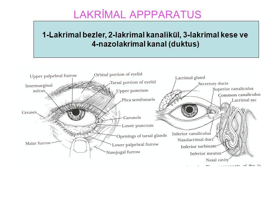 LAKRİMAL APPPARATUS 1-Lakrimal bezler, 2-lakrimal kanalikül, 3-lakrimal kese ve 4-nazolakrimal kanal (duktus)