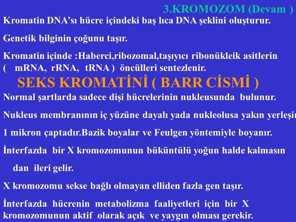 3. KROMATİN ( DEVAM ) DNA MOLEKÜLÜ Watson Crick Modeli :Çift helix yapan paralel iki molekül zincirdir. Her molekül zincir fosforik asit köprüleriyle