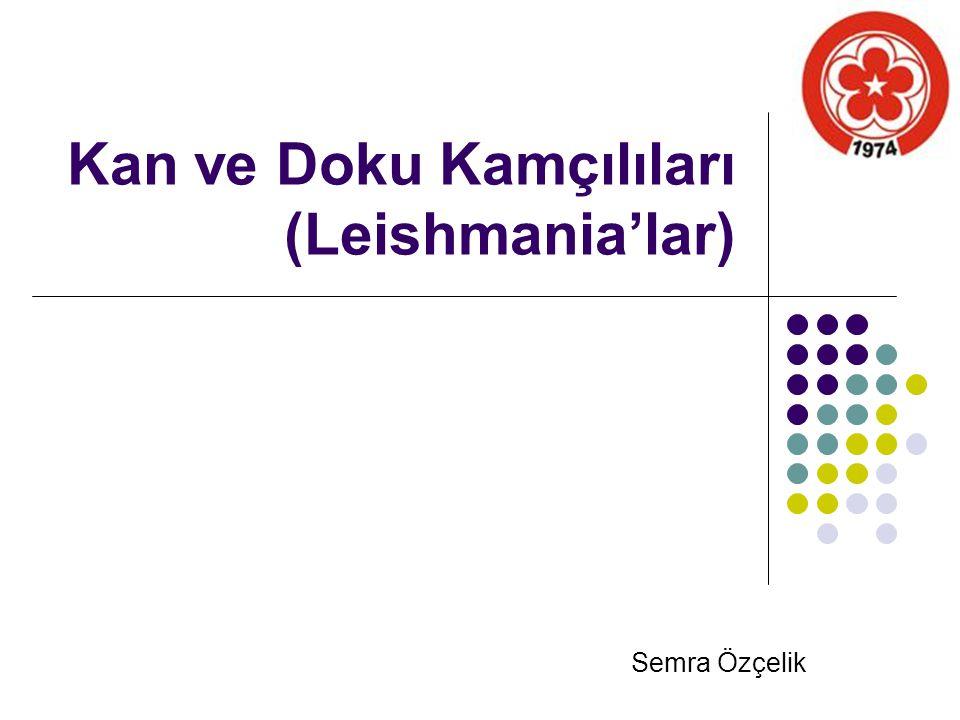 Kan ve Doku Kamçılıları (Leishmania'lar) Semra Özçelik