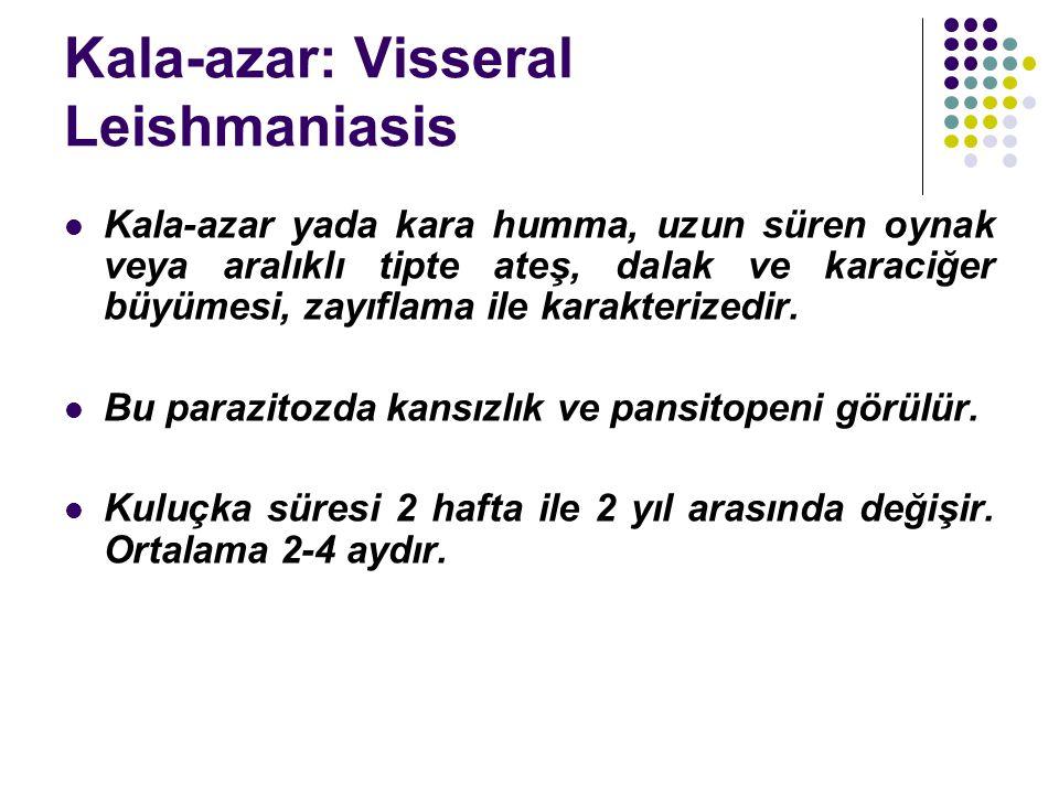 Kala-azar: Visseral Leishmaniasis Kala-azar yada kara humma, uzun süren oynak veya aralıklı tipte ateş, dalak ve karaciğer büyümesi, zayıflama ile karakterizedir.