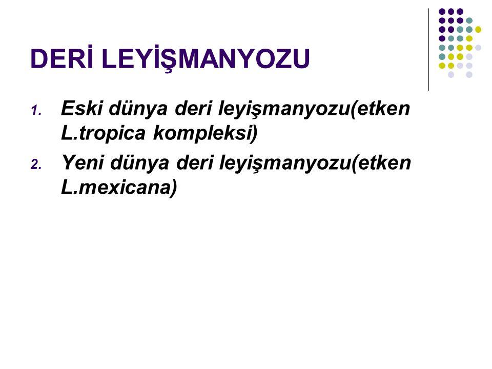 DERİ LEYİŞMANYOZU 1. Eski dünya deri leyişmanyozu(etken L.tropica kompleksi) 2. Yeni dünya deri leyişmanyozu(etken L.mexicana)
