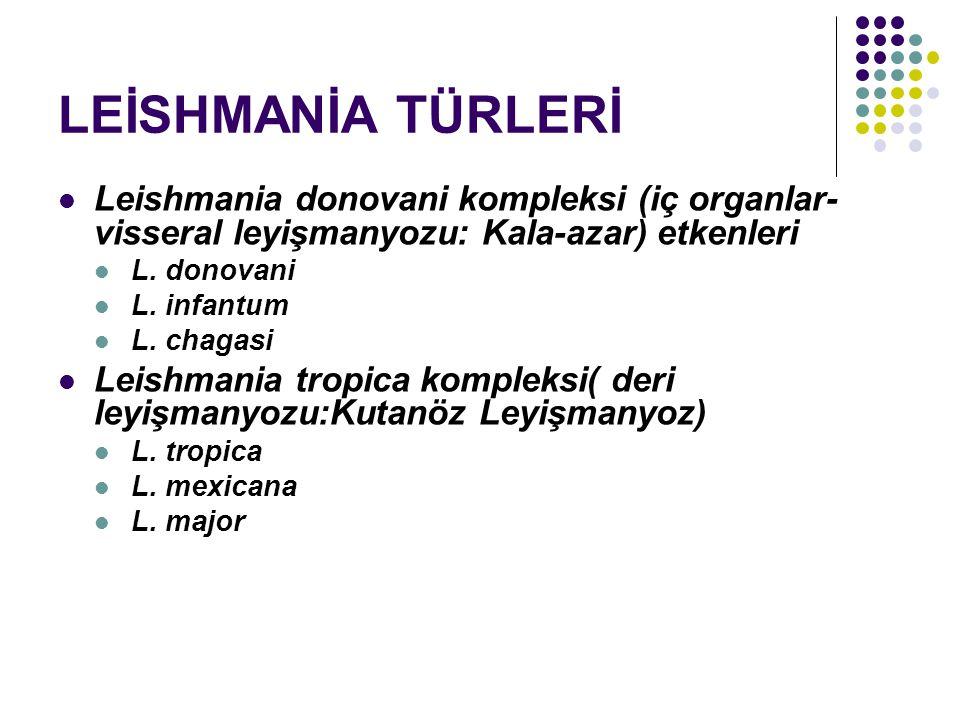 LEİSHMANİA TÜRLERİ Leishmania donovani kompleksi (iç organlar- visseral leyişmanyozu: Kala-azar) etkenleri L. donovani L. infantum L. chagasi Leishman