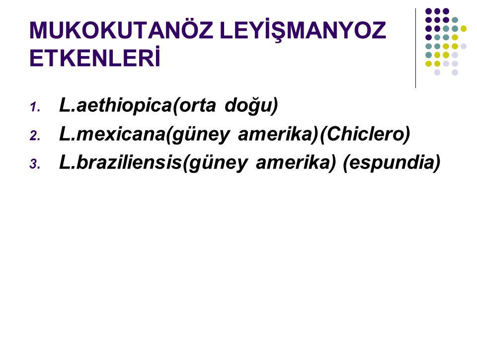 MUKOKUTANÖZ LEYİŞMANYOZ ETKENLERİ 1. L.aethiopica(orta doğu) 2. L.mexicana(güney amerika)(Chiclero) 3. L.braziliensis(güney amerika) (espundia)