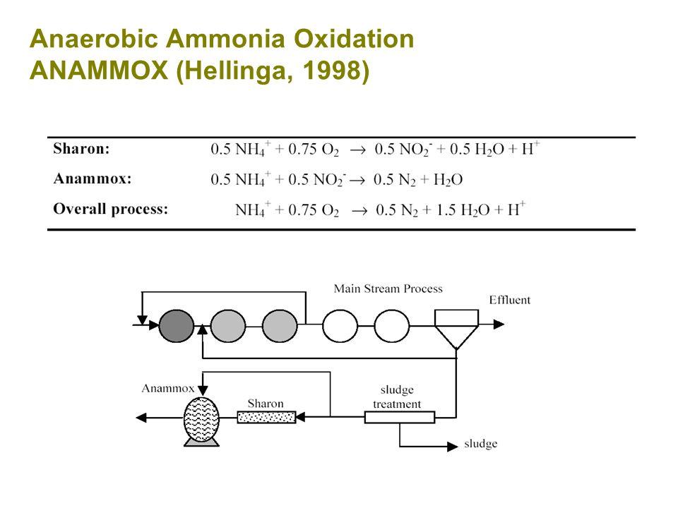 Anaerobic Ammonia Oxidation ANAMMOX (Hellinga, 1998)