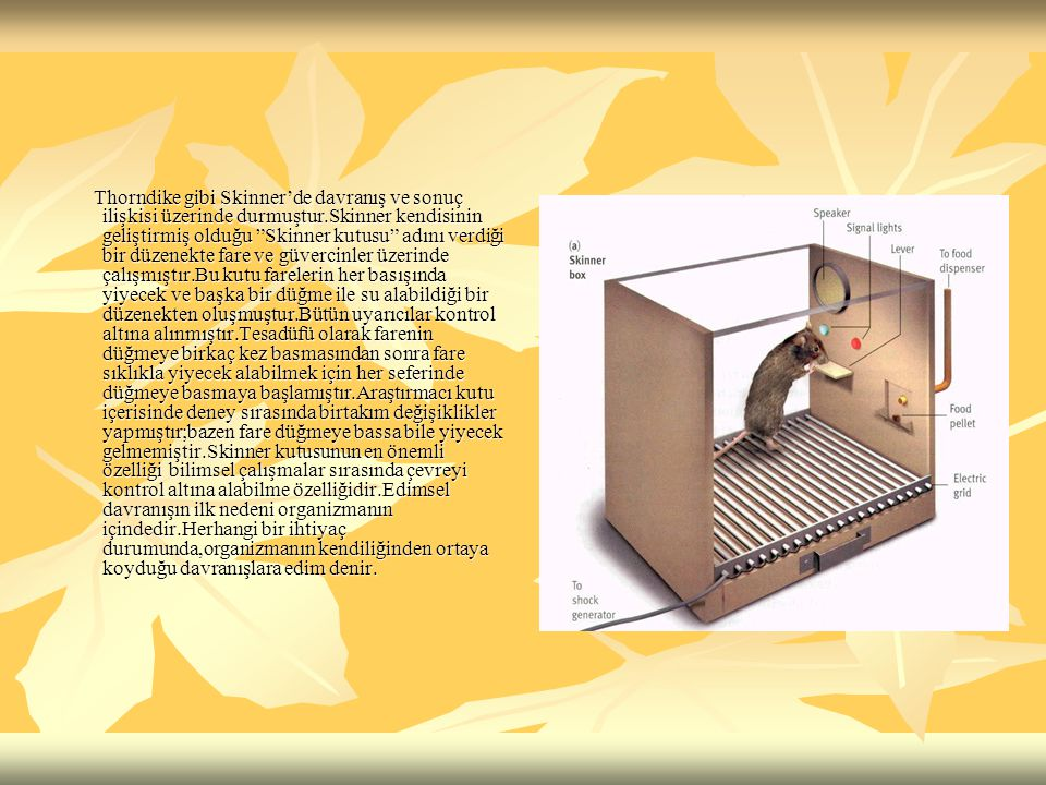 """Thorndike gibi Skinner'de davranış ve sonuç ilişkisi üzerinde durmuştur.Skinner kendisinin geliştirmiş olduğu """"Skinner kutusu"""" adını verdiği bir düzen"""