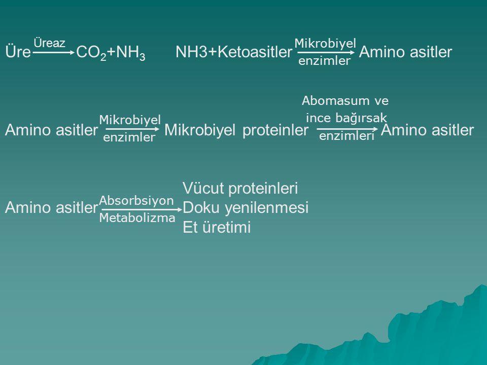 Üre CO 2 +NH 3 NH3+Ketoasitler Amino asitler Amino asitler Mikrobiyel proteinler Amino asitler Vücut proteinleri Amino asitler Doku yenilenmesi Et üre