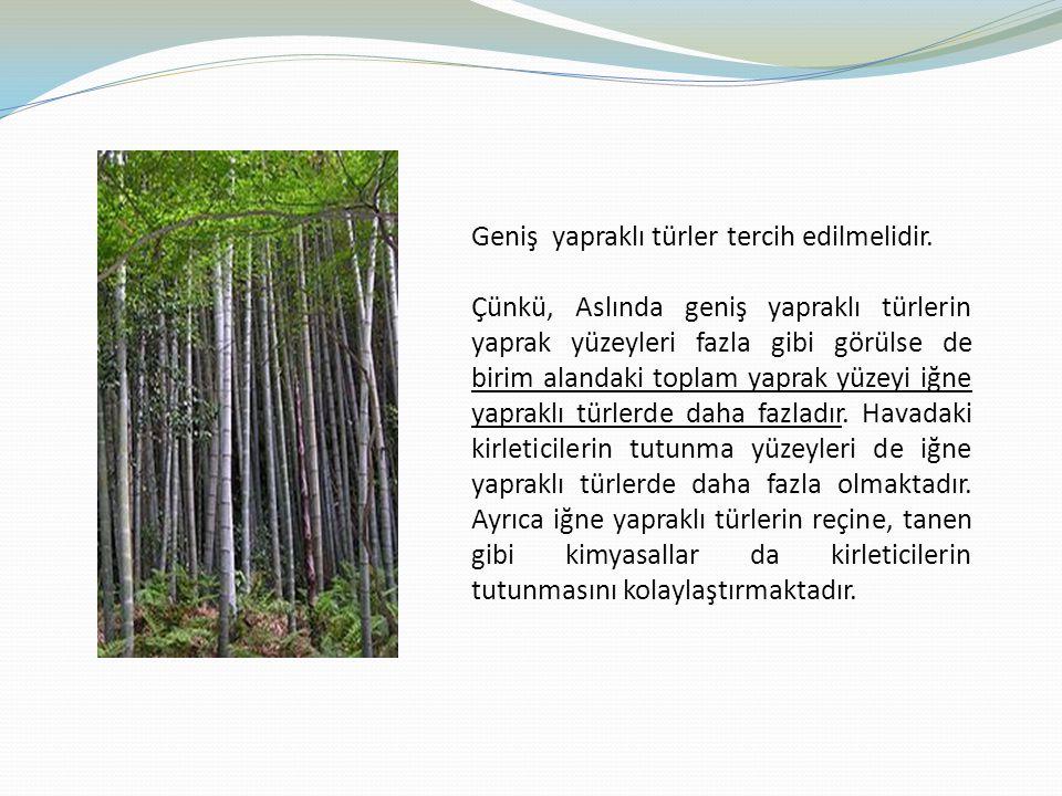 Geniş yapraklı türler tercih edilmelidir. Çünkü, Aslında geniş yapraklı türlerin yaprak yüzeyleri fazla gibi görülse de birim alandaki toplam yaprak y