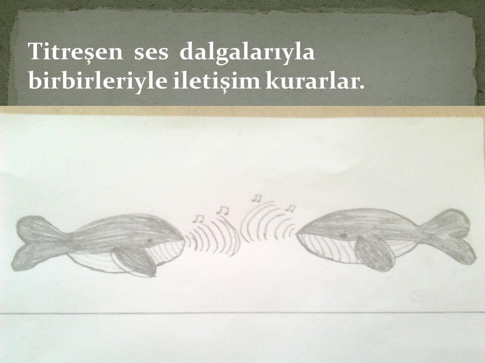 Titreşen ses dalgalarıyla birbirleriyle iletişim kurarlar.