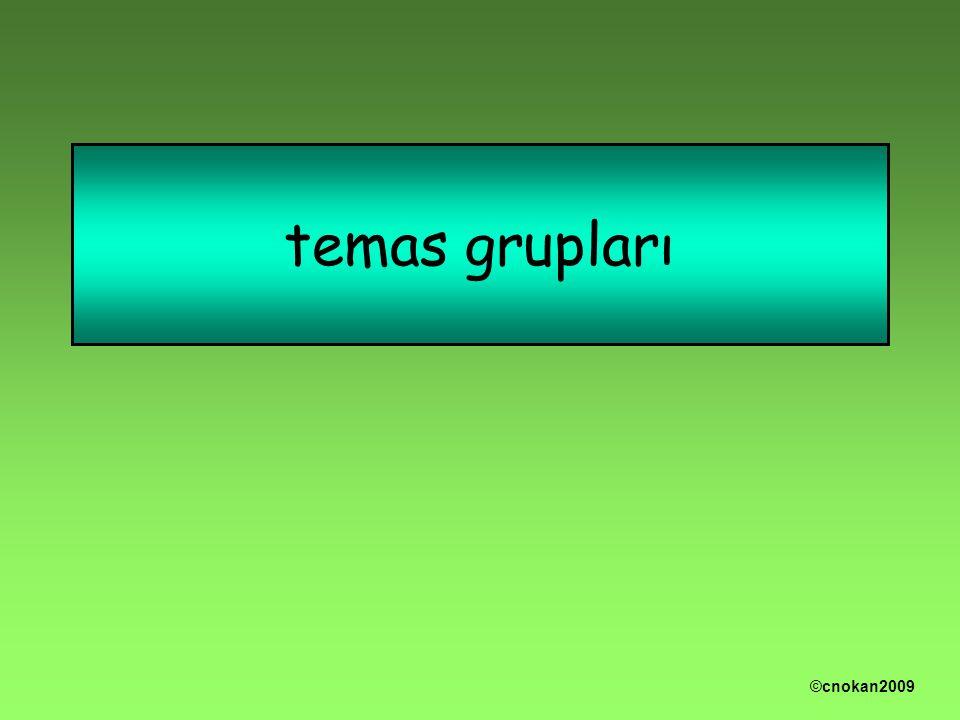 temas grupları ©cnokan2009
