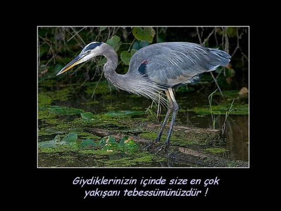 Mesaj Veren Kuşlar