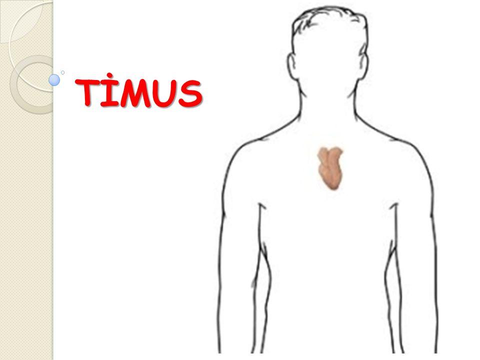  Üst ve ön mediastende lokalize lenfoepitelyal bir organdır