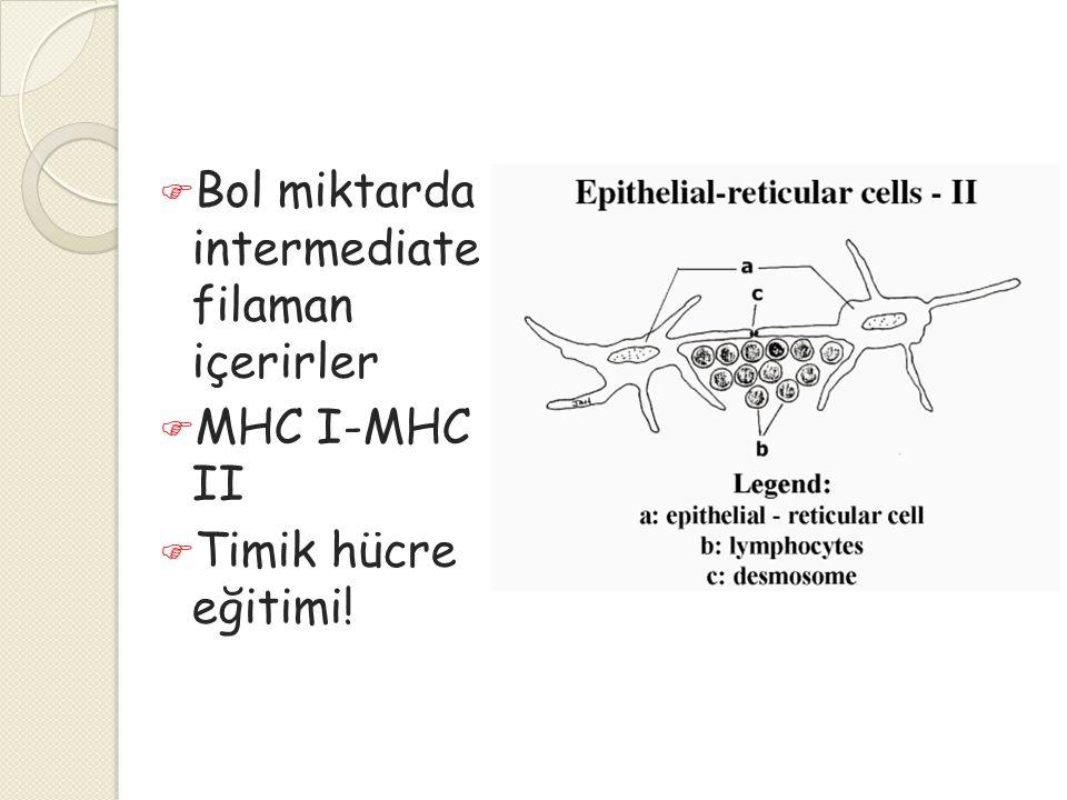  Bol miktarda intermediate filaman içerirler  MHC I-MHC II  Timik hücre eğitimi!