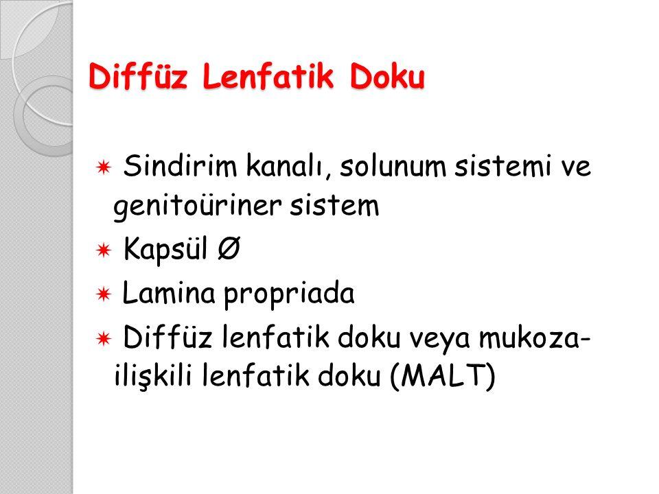 Diffüz Lenfatik Doku  Sindirim kanalı, solunum sistemi ve genitoüriner sistem  Kapsül Ø  Lamina propriada  Diffüz lenfatik doku veya mukoza- ilişk