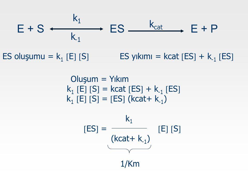 ES oluşumu = k 1  E   S  ES yıkımı = kcat  ES  + k -1  ES  E + S ESE + P k1k1 k -1 k cat Oluşum = Yıkım k 1  E   S  = kcat  ES  + k -1  ES  k 1  E   S  =  ES  (kcat+ k -1 ) k 1  ES  =  E   S  (kcat+ k -1 ) 1/Km