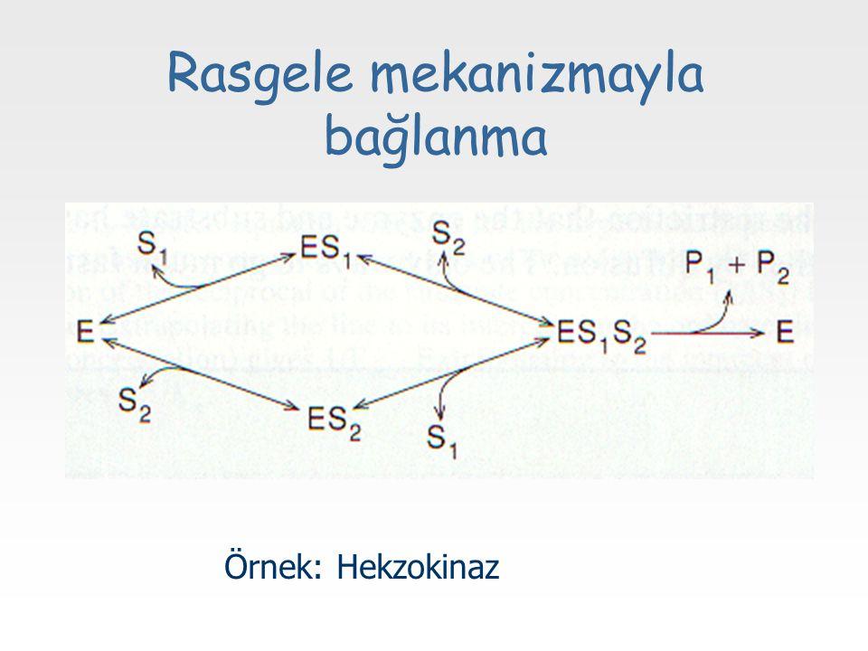 Rasgele mekanizmayla bağlanma Örnek: Hekzokinaz