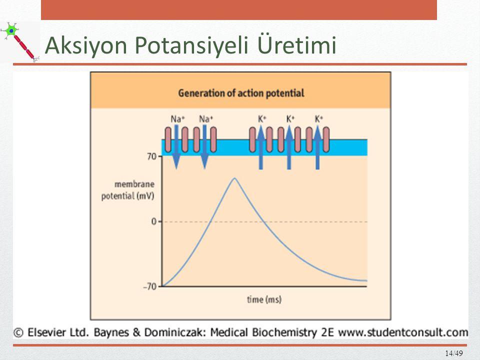 Nörotransmitter salgılanımı A.Dinlenme durumunda veziküller mikrotübüllere yapışır.