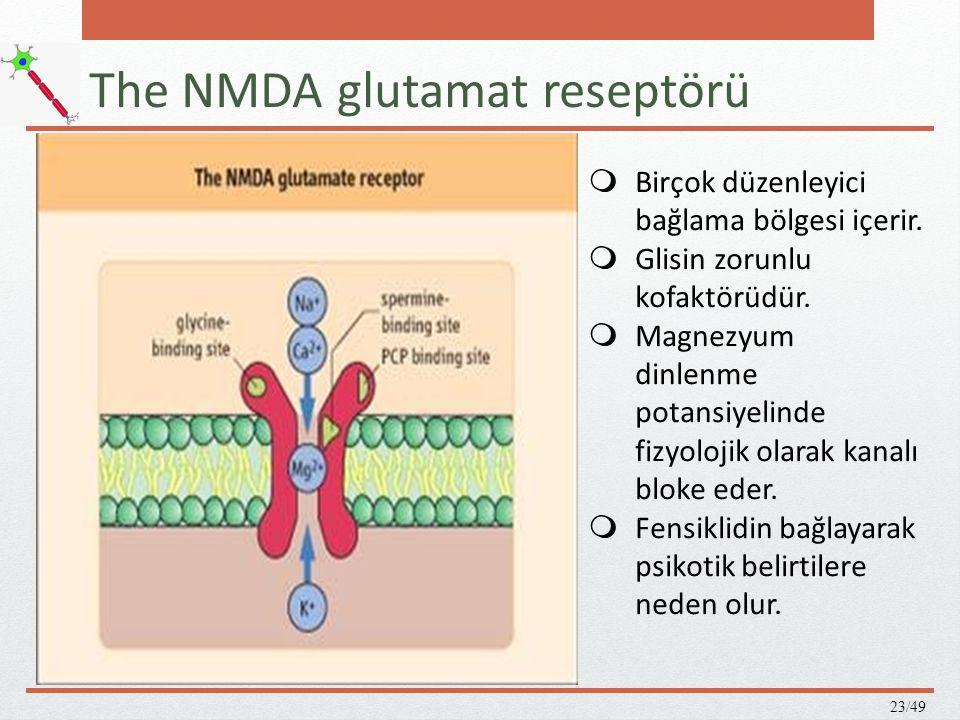 γ-Amino Bütirik Asit (GABA)  GABA glutamat dehidrogenazla glutamattan sentezlenir.